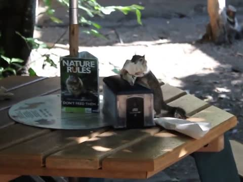 Squirrel Helps Himself to Napkins