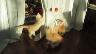 Determined Kittens try to Catch Shadow