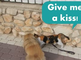 Love Story Between Cat and Dog! - Video
