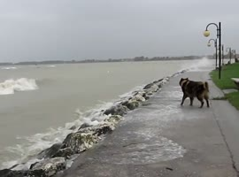Dog Versus the Ocean
