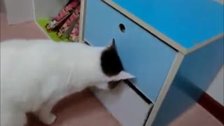 Cat and Human Argue over the Drawer - Video