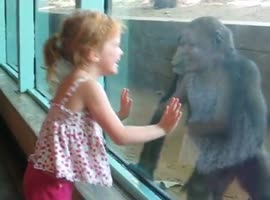 Little Girl Imitates The Movements Аnd Kisses Baby Gorilla