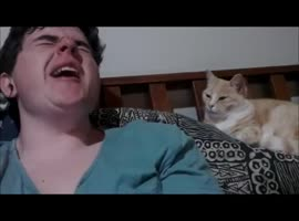 Cute Cat Mimics Owners Yawn