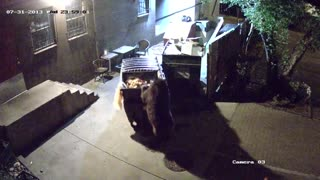 Bear steals trash! - Video