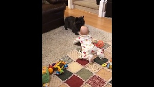 Dog Gets Excited By Adorable Baby - Video
