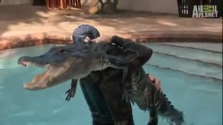 Man brings crocodile pool - Video
