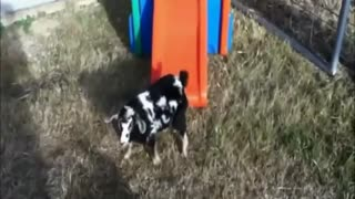 Funny Animals cats, dogs, goats... - Video