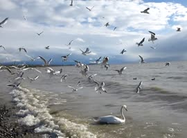 Seagulls In Action - Video