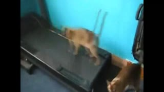 fitness cat - Video