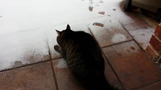 Cat Meets Snow - Video