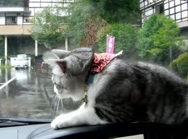 _Dashboard Cat vs Windshield Wipers_
