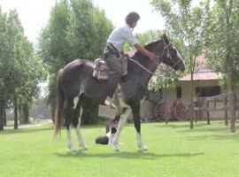 Horse Whispering in Argentina - Video