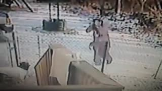Cat attacks woman - Video