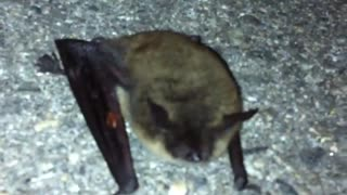 Bat Poke - Video