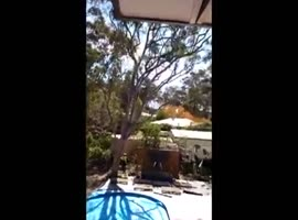 Tree Falls the Wrong Direction - Video