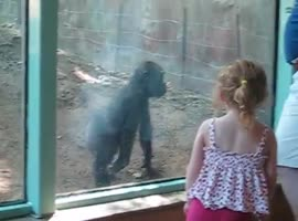 little girl and gorilla are friends