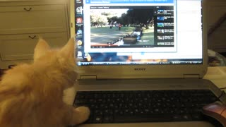 Kitten is watching video ... - Video