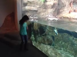 Little Girl and Horned Puffin Play Chase! - Video