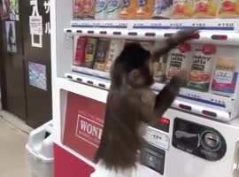 very smart monkey - Video