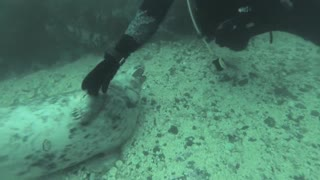 Wild seal pups play with divers! - Video
