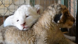 This Adorable Moment Will Make You Sleepy - Video