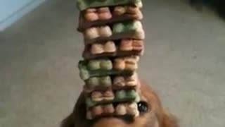 Dog Treat Stack - Video