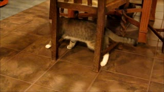 Adorable Cat Skates Across Tile Floor! - Video