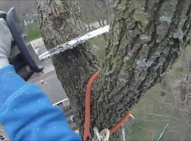 90ft Tree Removal, While Still on It