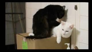 Cat Gives Other Cat Relaxing Massage - Video