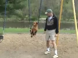 Dog Casually Enjoys Swing