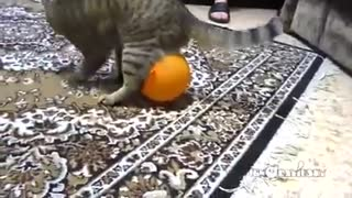 Cat, Balloon, And Electrostatics - Video