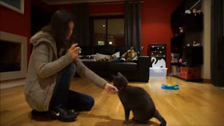 Silvie the Cat Shows Off Impressive Tricks - Video