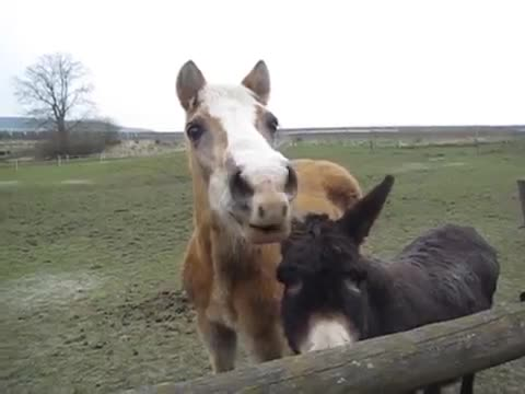 Horse give funny sounds
