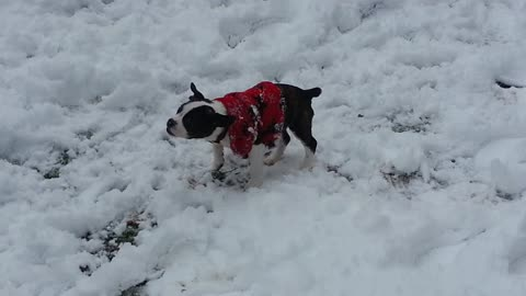Puppy experiences snow for first time