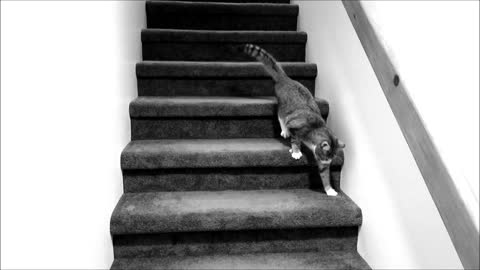 Quirky the Blind Kitten navigates down the stairs