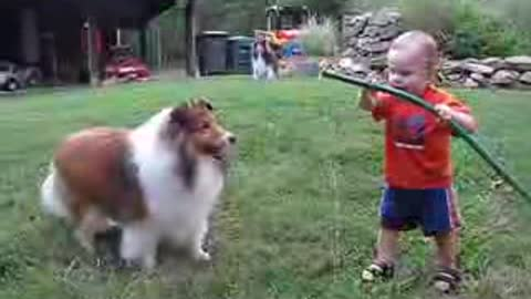 baby and dog playing