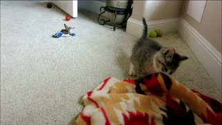 Blind Kitten Excited While Exploring Room - Video