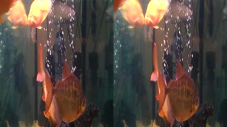 fishbowl 3D stereoscopic - Video