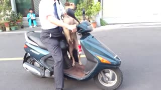 Dog Gets on Bike Like a Boss - Video