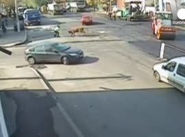 Bull Attacks Traffic Cop in Romania - Video