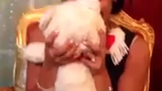 Guy surprises girlfriend with long lost teddy bear - Video