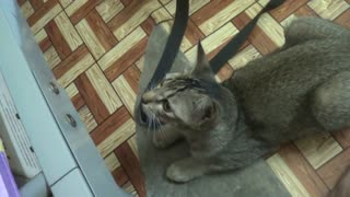 My Cat Make Funny Moves - Video
