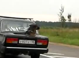 Interesting Lada - Video