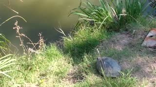 turtle flying through the air - Video