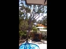 Cutting a tree goes horribly wrong - Video