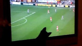 Kitten Tries To Catch Soccer Players on TV