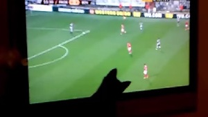 Kitten Tries To Catch Soccer Players on TV - Video