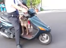 dog wants to ride a bike - Video