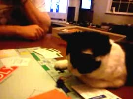 Pickle the cat - plays Monopoly - Video