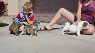 Two Young Boys Love Being Introduced To A Group Of Adorable Puppies